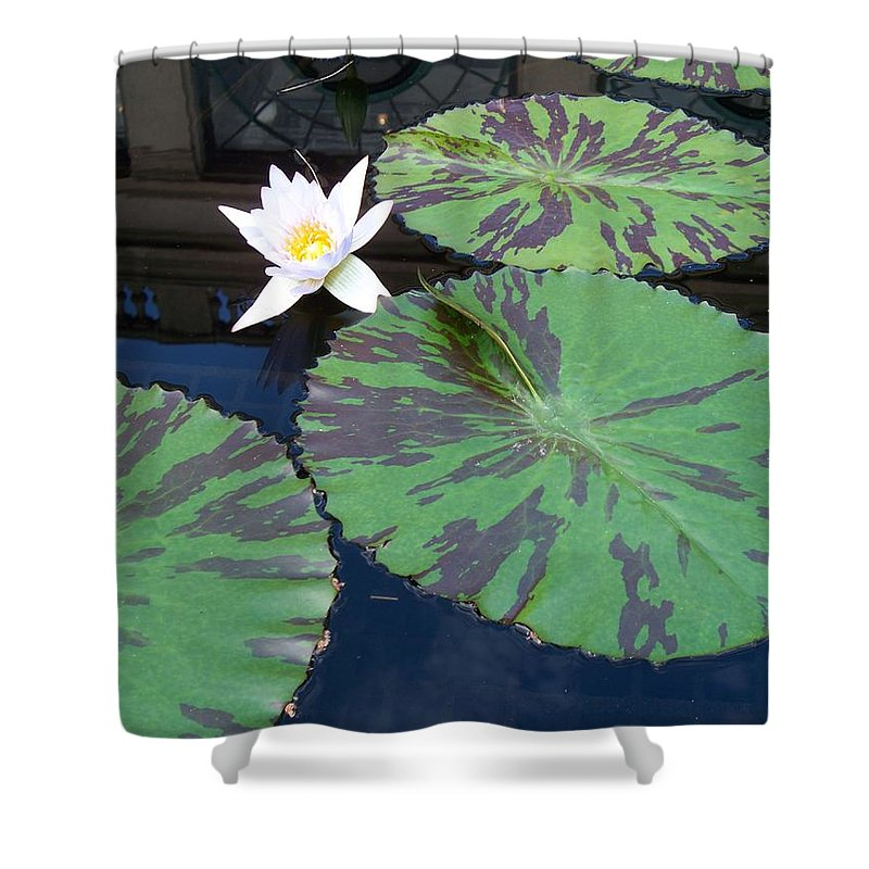 Photograph Shower Curtain featuring the photograph Monet Lilies White by Eric Schiabor
