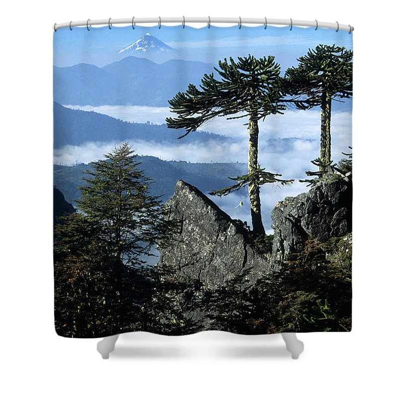 Chile Shower Curtain featuring the photograph Monkey Puzzle Trees In Huerquehue National Park by James Brunker