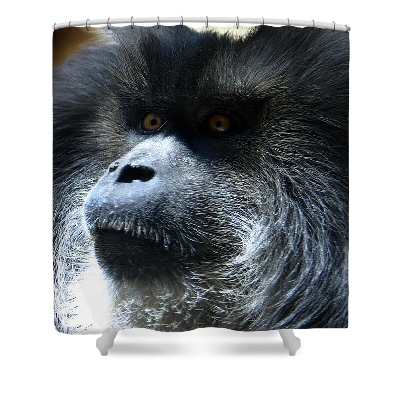 Monkey Shower Curtain featuring the photograph Monkey Stare by Anthony Jones