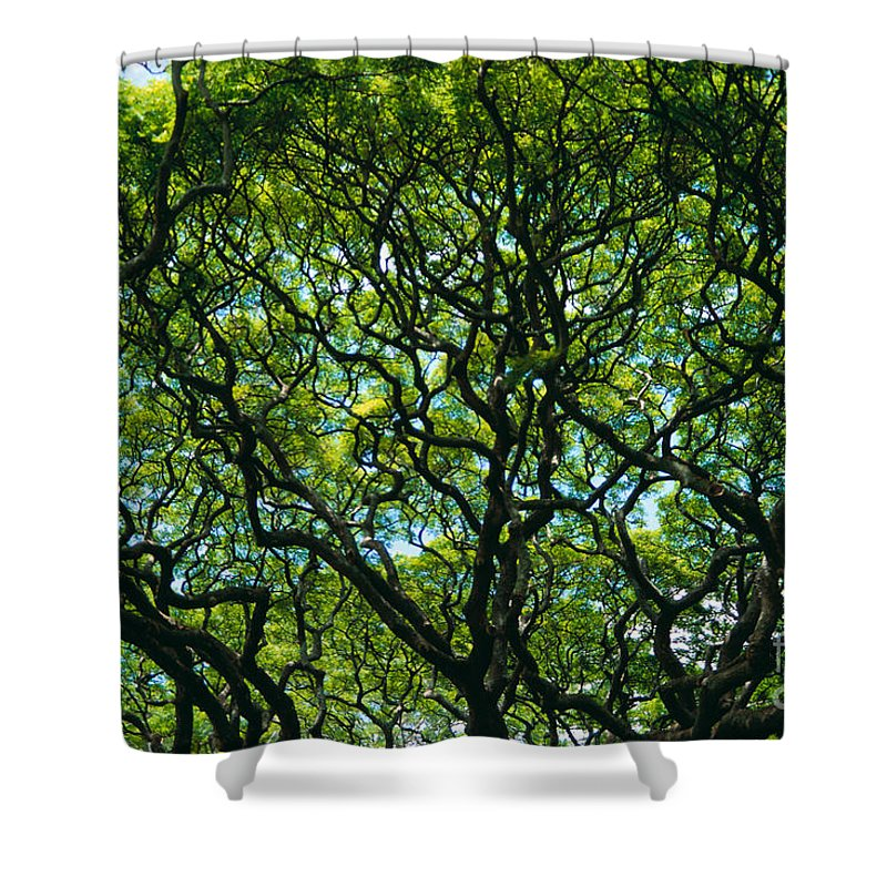Afternoon Shower Curtain featuring the photograph Monkeypod Canopy by Peter French - Printscapes