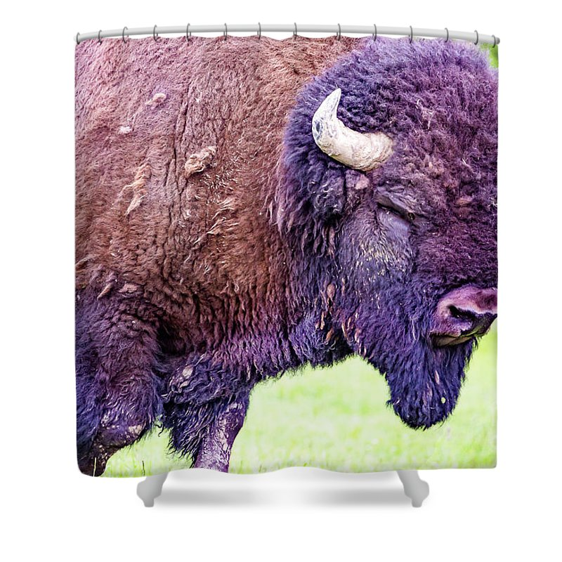 Bisons Shower Curtain featuring the photograph Monster Bison by Csaba Demzse