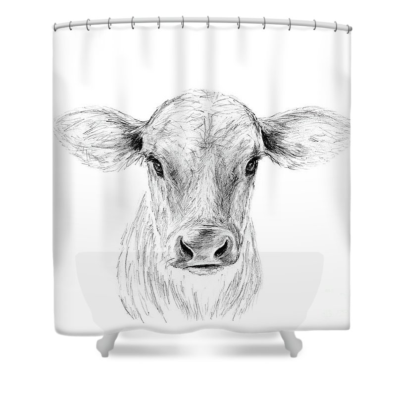 Drawing Shower Curtain Featuring The Moo A Young Jersey Cow By Stacey May