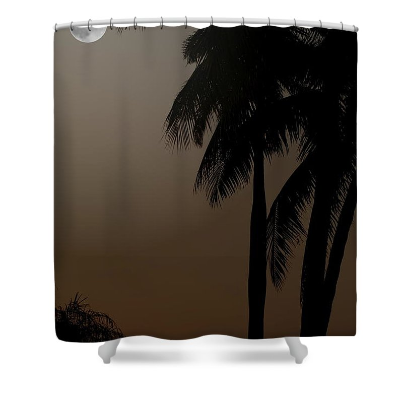 Moonlight Shower Curtain featuring the photograph Moonlight And Palms by Diane Merkle