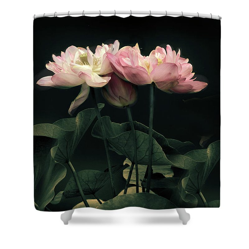 Lotus Shower Curtain Featuring The Photograph Moonlight By Jessica Jenney