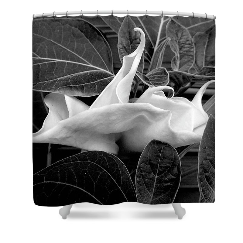 Flower Shower Curtain featuring the photograph Moonlight/moonflower by Sylvia Freeman