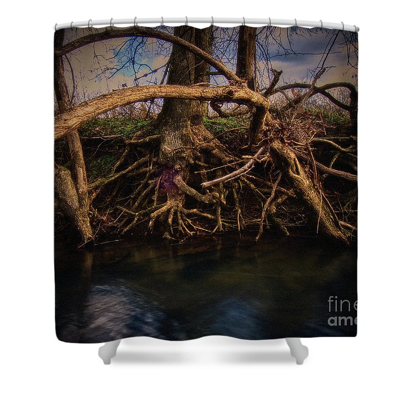 Roots Shower Curtain featuring the photograph More Roots In Creek by Stanton Tubb