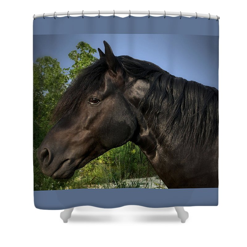 Animal Shower Curtain featuring the photograph Morgan Horse by Sandra Huston