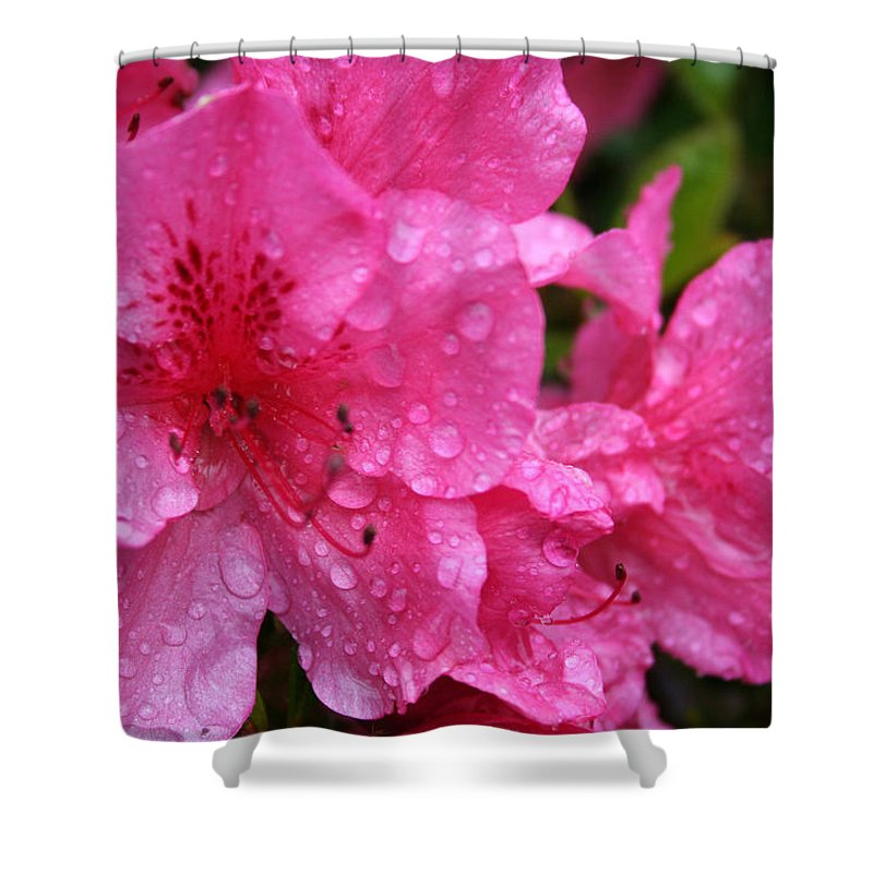 Azaleas Shower Curtain featuring the photograph Morning Dew by Mary Gaines