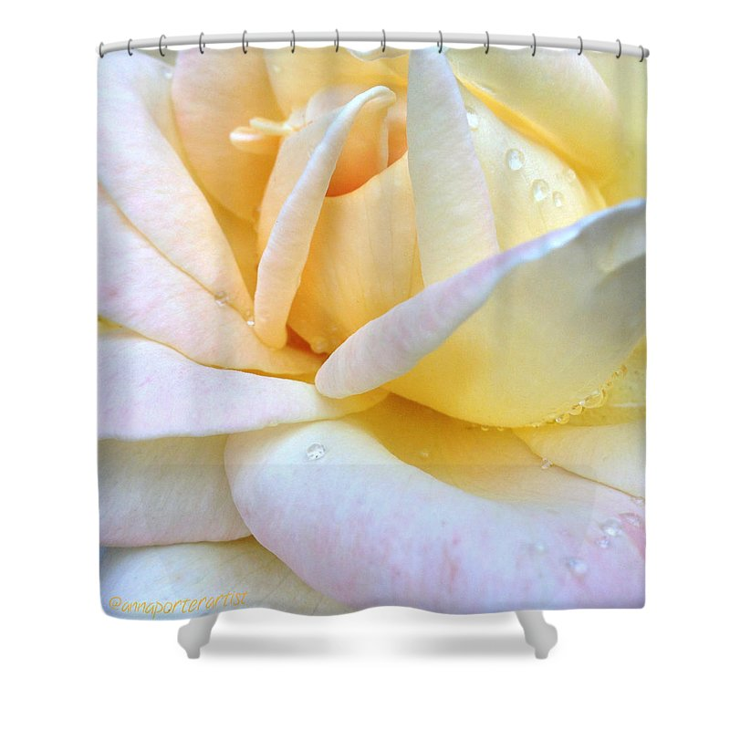 Morning Dew On A Pale Yellow Rose Shower Curtain featuring the photograph Morning Dew on a Pale Yellow Rose by Anna Porter
