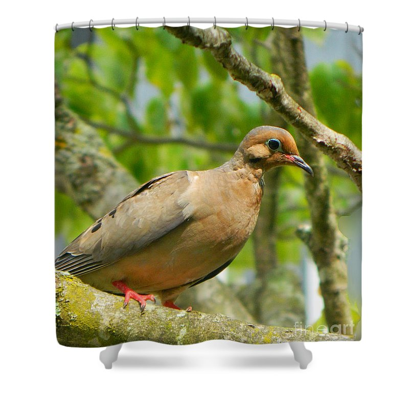 Morning Dove Shower Curtain featuring the photograph Morning Dove by Emmy Vickers