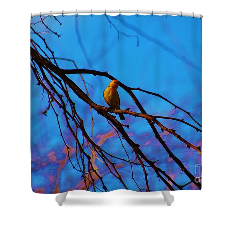 Saffron Finch Shower Curtain featuring the photograph Morning Finch by Craig Wood