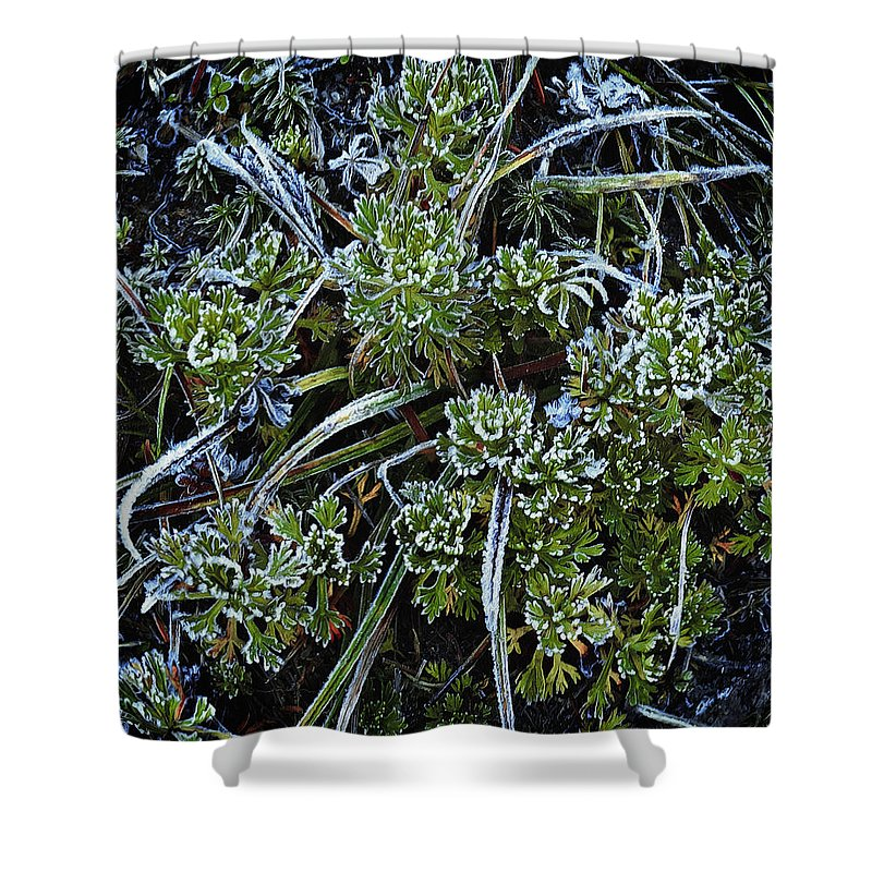 Ground Cover Shower Curtain featuring the photograph Morning Frost by John Christopher
