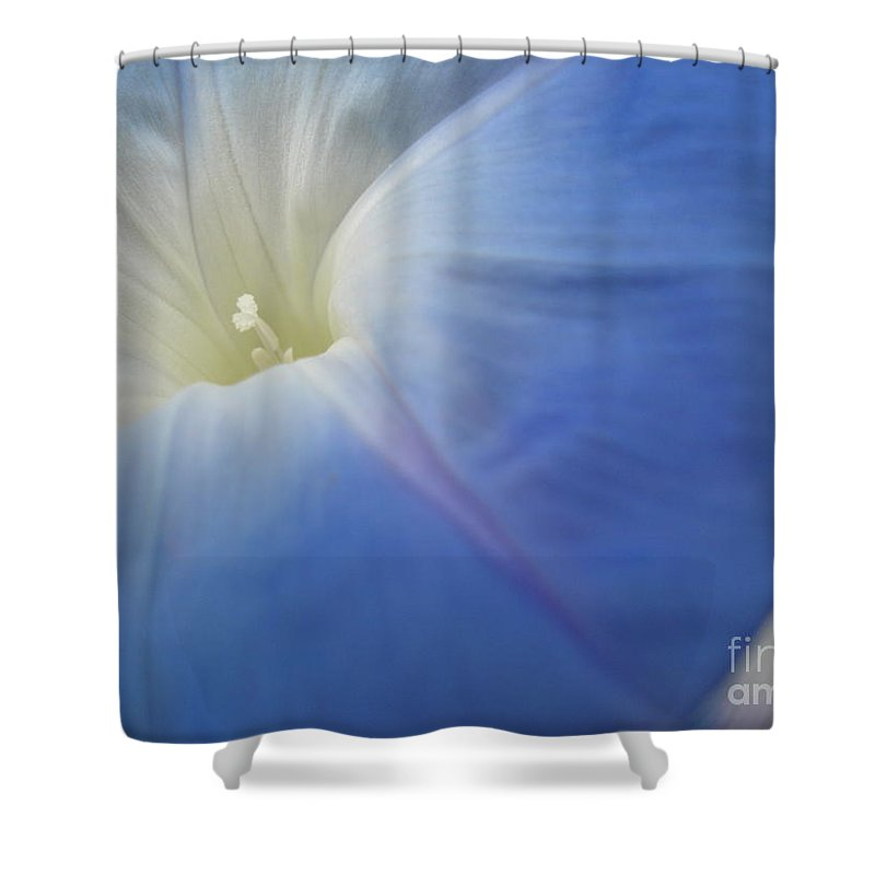 Flower Shower Curtain featuring the photograph Morning Glory by Chad Natti
