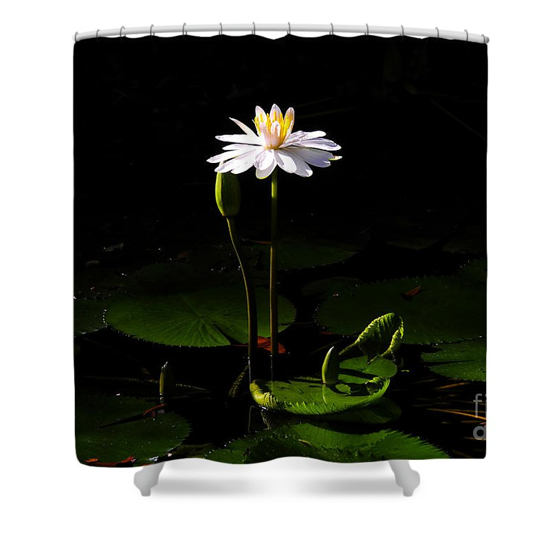 Morning Shower Curtain featuring the photograph Morning Glory by David Lee Thompson