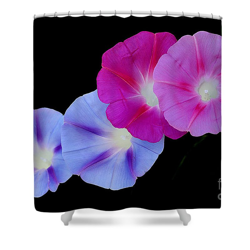 Morning Glory Shower Curtain featuring the photograph Morning Glory Quartet by Nobi Nagase