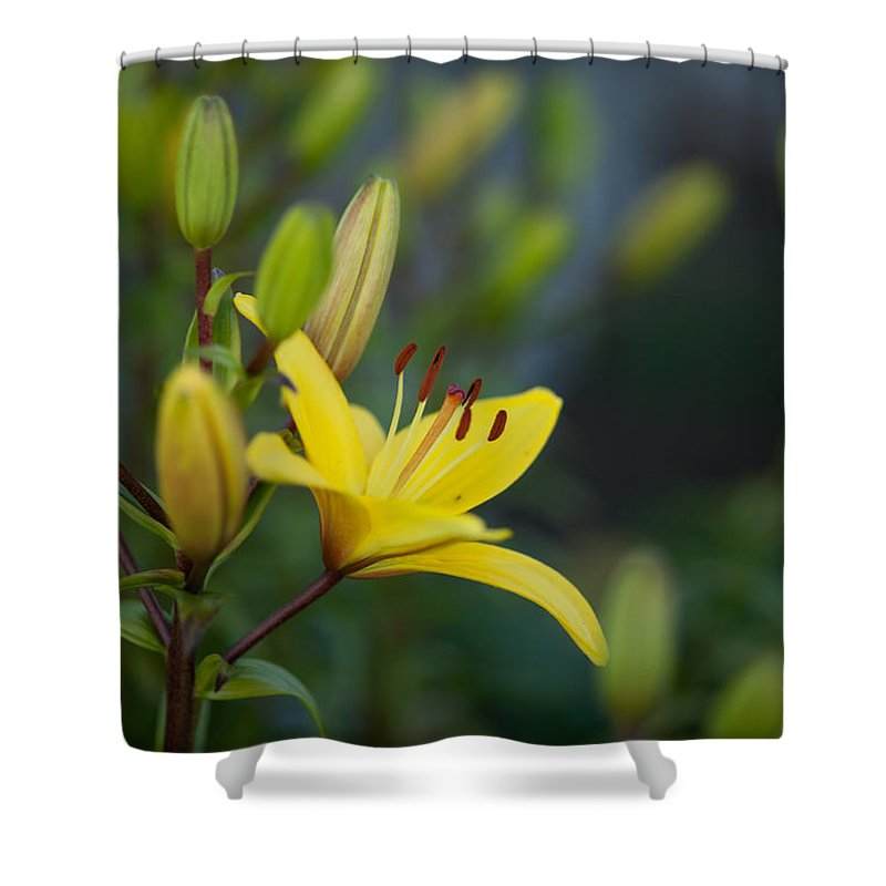 Lily Shower Curtain featuring the photograph Morning Lily by Mike Reid