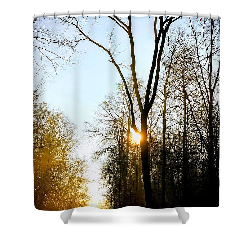 Tree Shower Curtain featuring the photograph Morning Mood In The Forest by Matthias Hauser