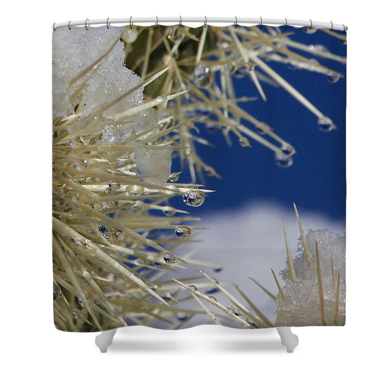 Shower Curtain featuring the photograph Morning Snow On Cactus Spines #1 by Eric Rosenwald