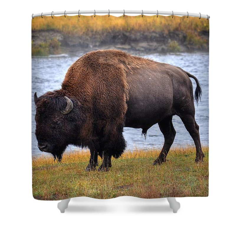 Nature Shower Curtain featuring the photograph Morning Stroll Along The Madison by Michael Morse