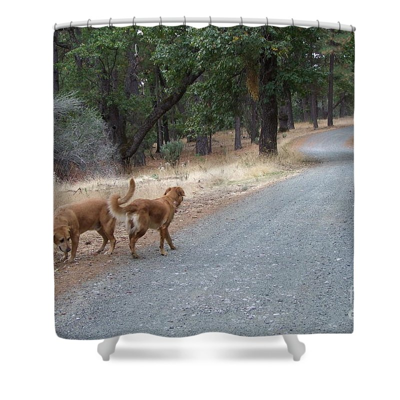 Dogs Shower Curtain featuring the photograph Morning Stroll by Mary Deal