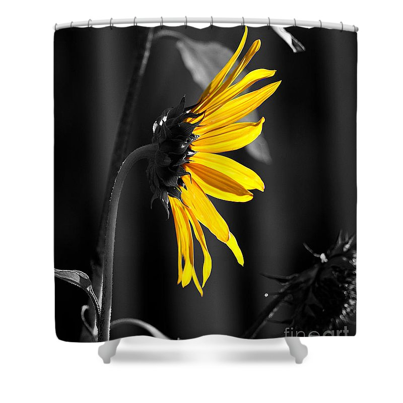 Clay Shower Curtain featuring the photograph Morning Sun by Clayton Bruster