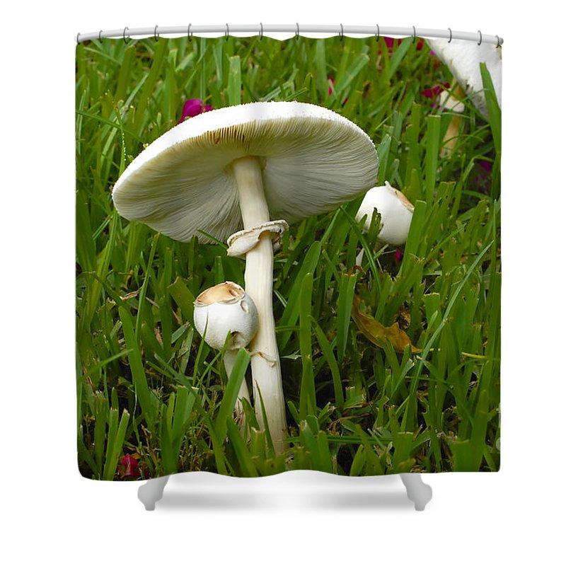 Mushrooms Shower Curtain featuring the photograph Morning Surprise by David Lee Thompson