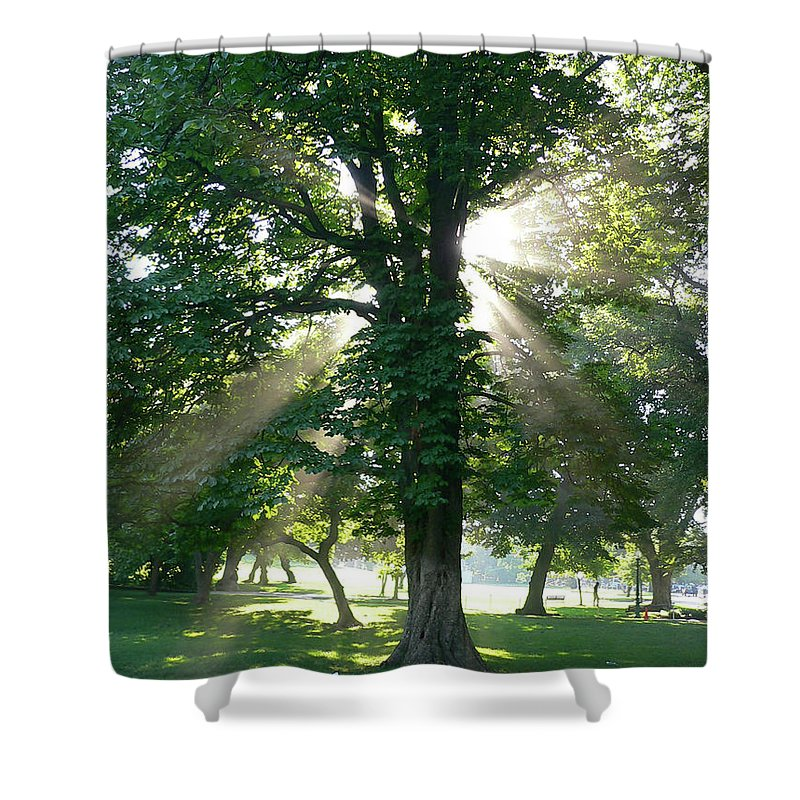 Tree Shower Curtain featuring the photograph Morning Tree by Angela Wright