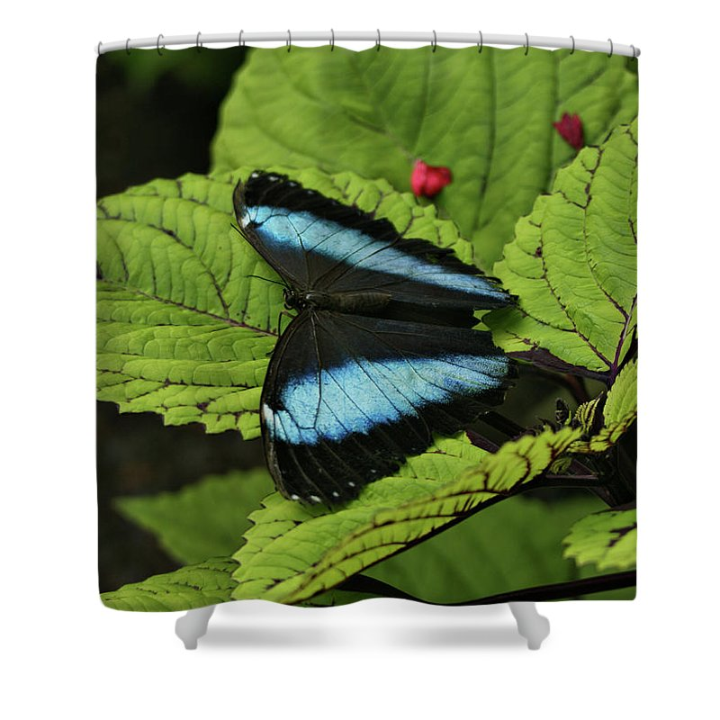 Butterfly Shower Curtain featuring the photograph Morpho Butterfly by Sandy Keeton
