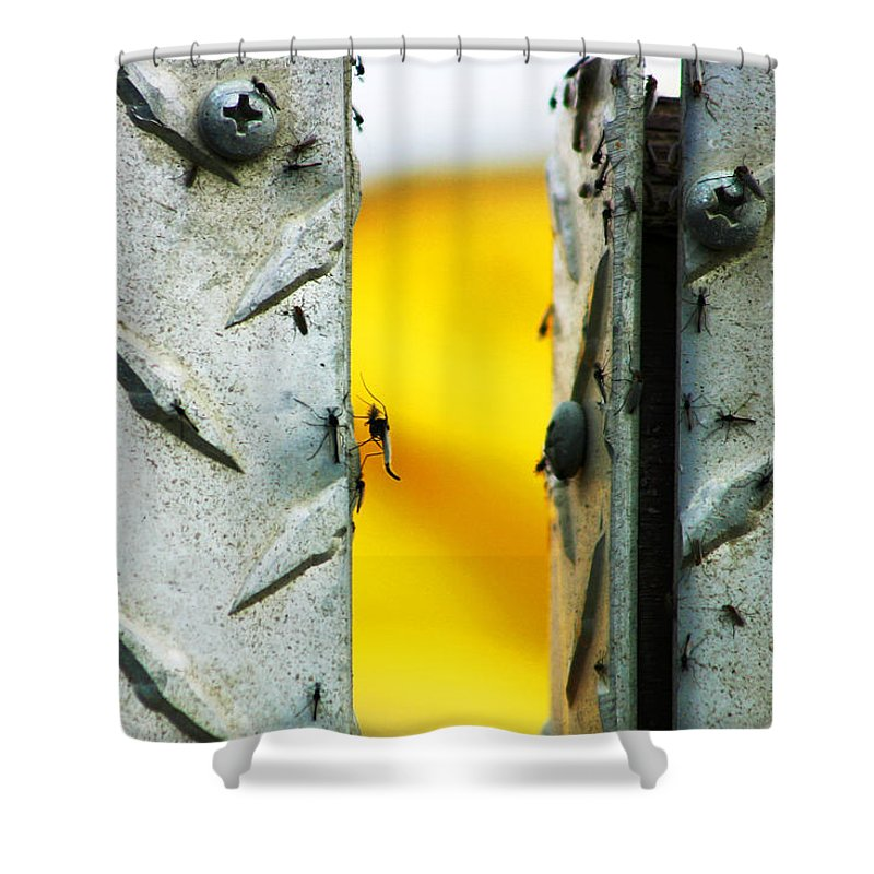 Mosquiros Shower Curtain featuring the photograph Mosquitos by Anthony Jones