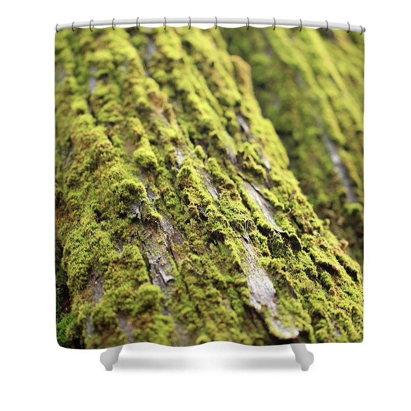 Moss Shower Curtain featuring the photograph Moss On A Cedar by Tracy Chappell