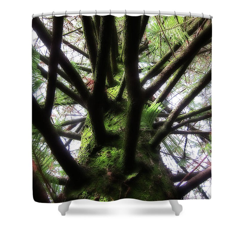 Pine Shower Curtain featuring the photograph Moss Tree by Douglas Barnard
