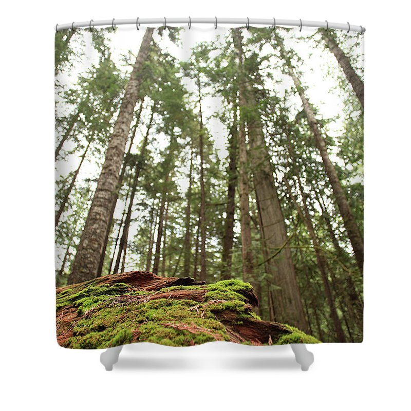Moss Shower Curtain featuring the photograph Moss Under The Cedars by Tracy Chappell