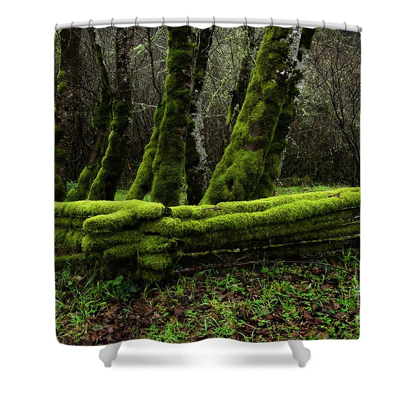 Moss Shower Curtain featuring the photograph Mossy Fence 3 by Bob Christopher