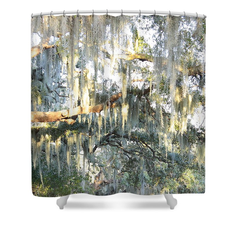 Spanish Moss Shower Curtain featuring the photograph Mossy Live Oak by Carol Groenen