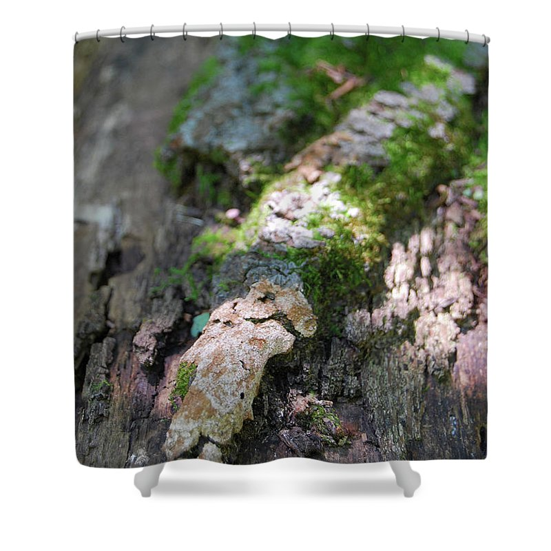 Moss Shower Curtain featuring the photograph Mossy Tree by Trish Hale