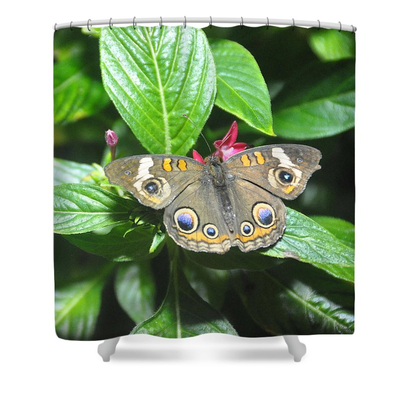 Moth Shower Curtain featuring the photograph Moth 1 by Rich Bodane