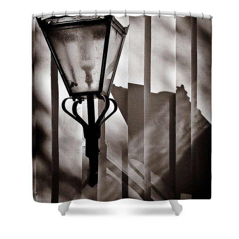 Moth Shower Curtain featuring the photograph Moth And Lamp by Dave Bowman