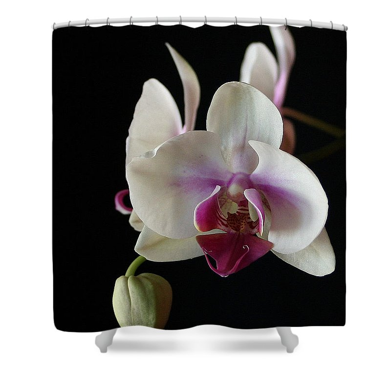 Moth Shower Curtain featuring the photograph Moth Orchid 2 by Marna Edwards Flavell