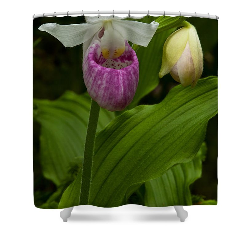 Wildflowers Shower Curtain featuring the photograph Mother And Child by Irwin Barrett