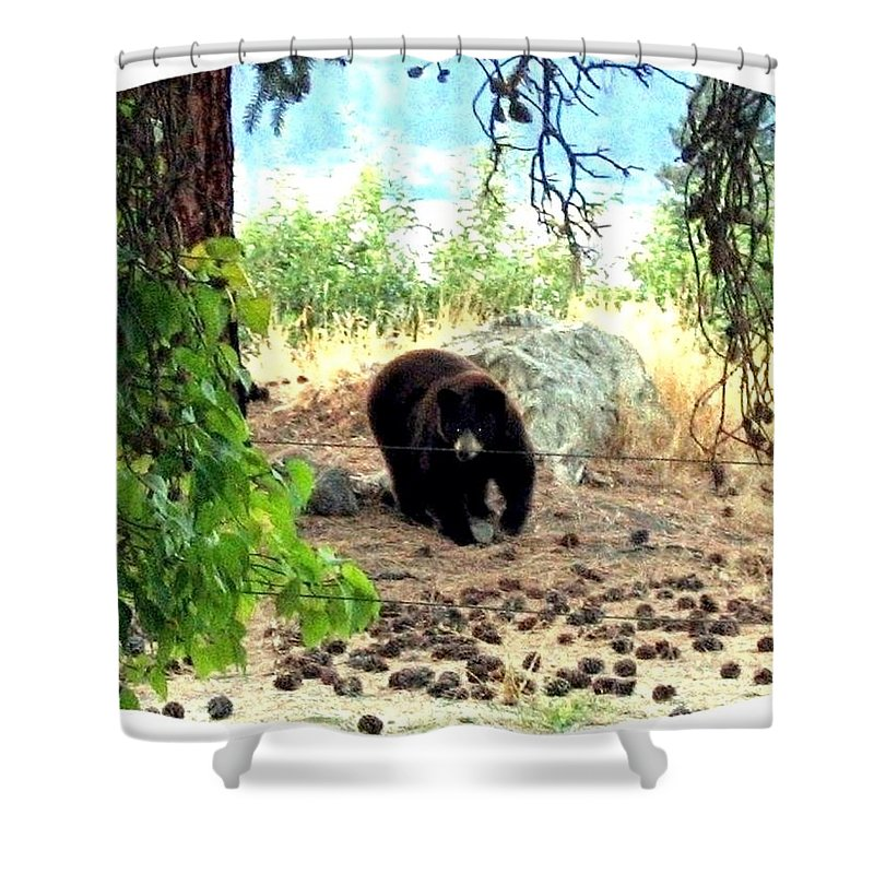 Bear Shower Curtain featuring the photograph Mother Bear by Will Borden