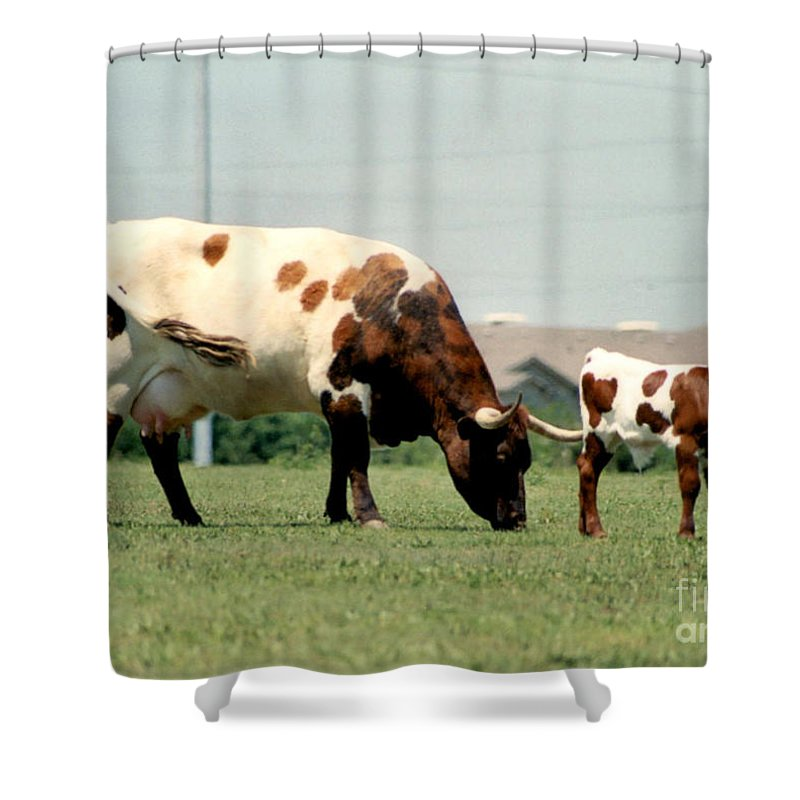 Mother Guarding Her Calf Prints Shower Curtain featuring the photograph Mother Guarding Her Calf by Ruth Housley