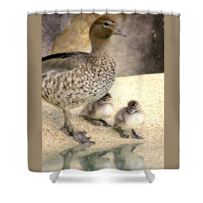 Animals Shower Curtain featuring the photograph Mother Of Twins by Holly Kempe