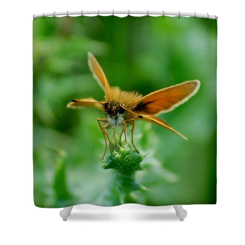 Landscape Shower Curtain featuring the photograph Mothera by David Lane