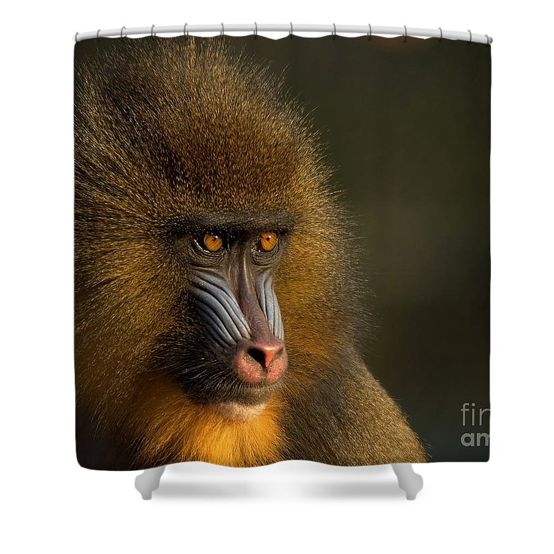 Wildlife Shower Curtain featuring the photograph Mother's Finest by Jacky Gerritsen