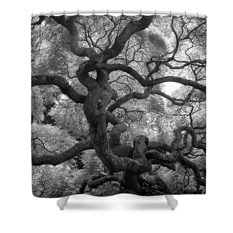 Tree Shower Curtain featuring the photograph Motivations by Mitch Cat