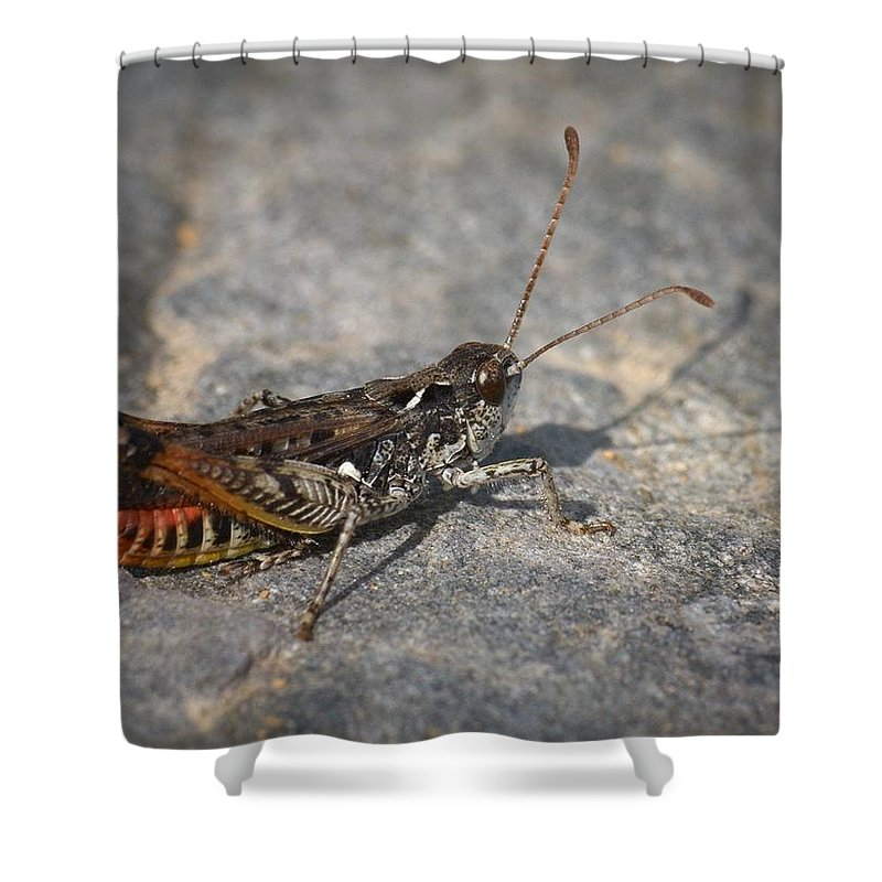 Lehtokukka Shower Curtain featuring the photograph Mottled Grasshopper by Jouko Lehto