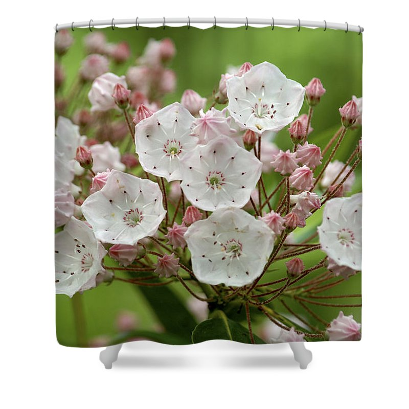 Flowers Shower Curtain featuring the photograph Mountain Laurel by Henri Irizarri