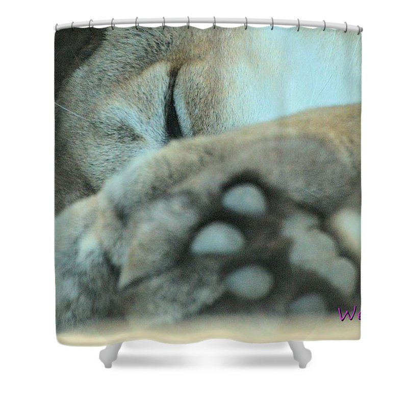 Zoo Shower Curtain featuring the photograph Mountain Lion by Wendy Fox
