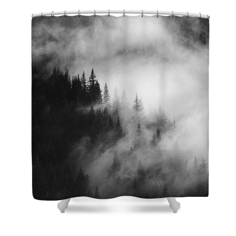 Fir Shower Curtains