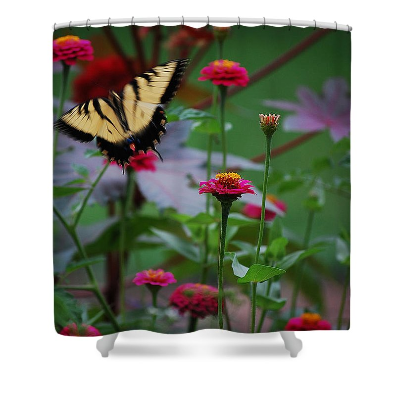 Butterfly Shower Curtain featuring the photograph Move On. by Robert Meanor